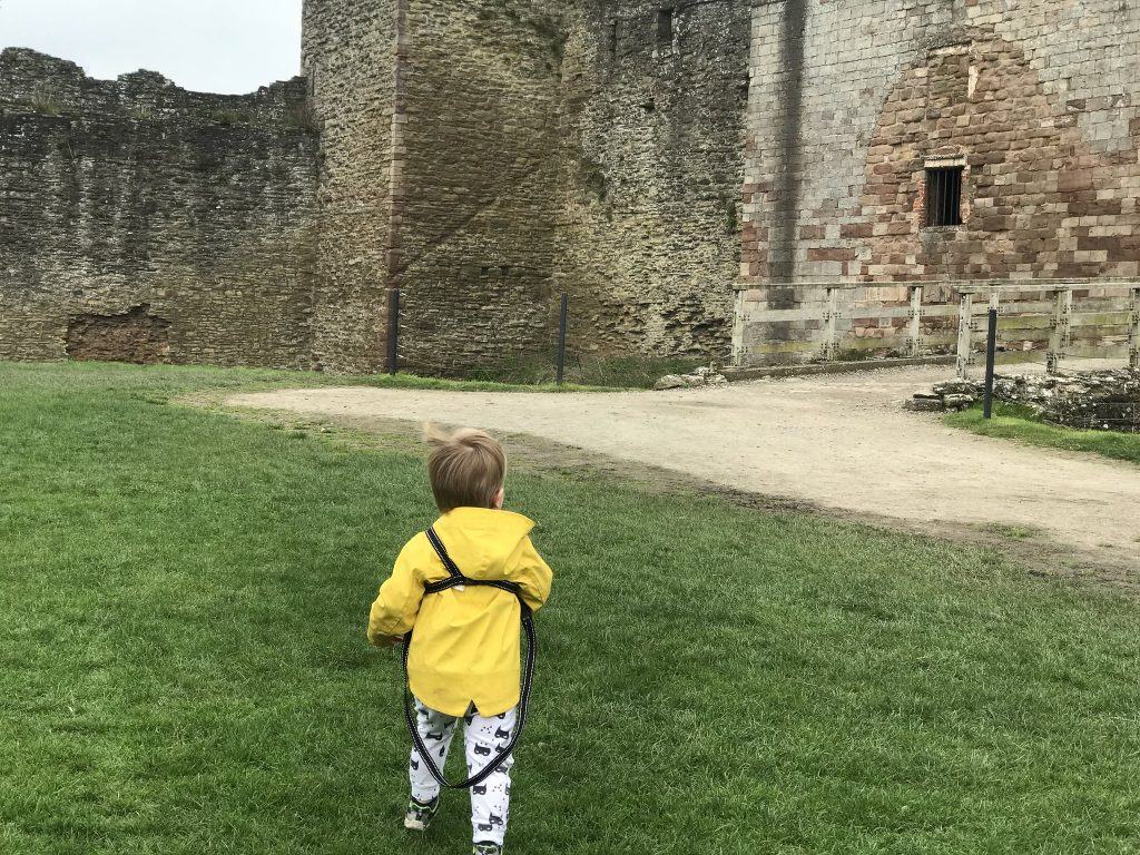 Dexter walking along the grass with Ludlow castle ruis in background