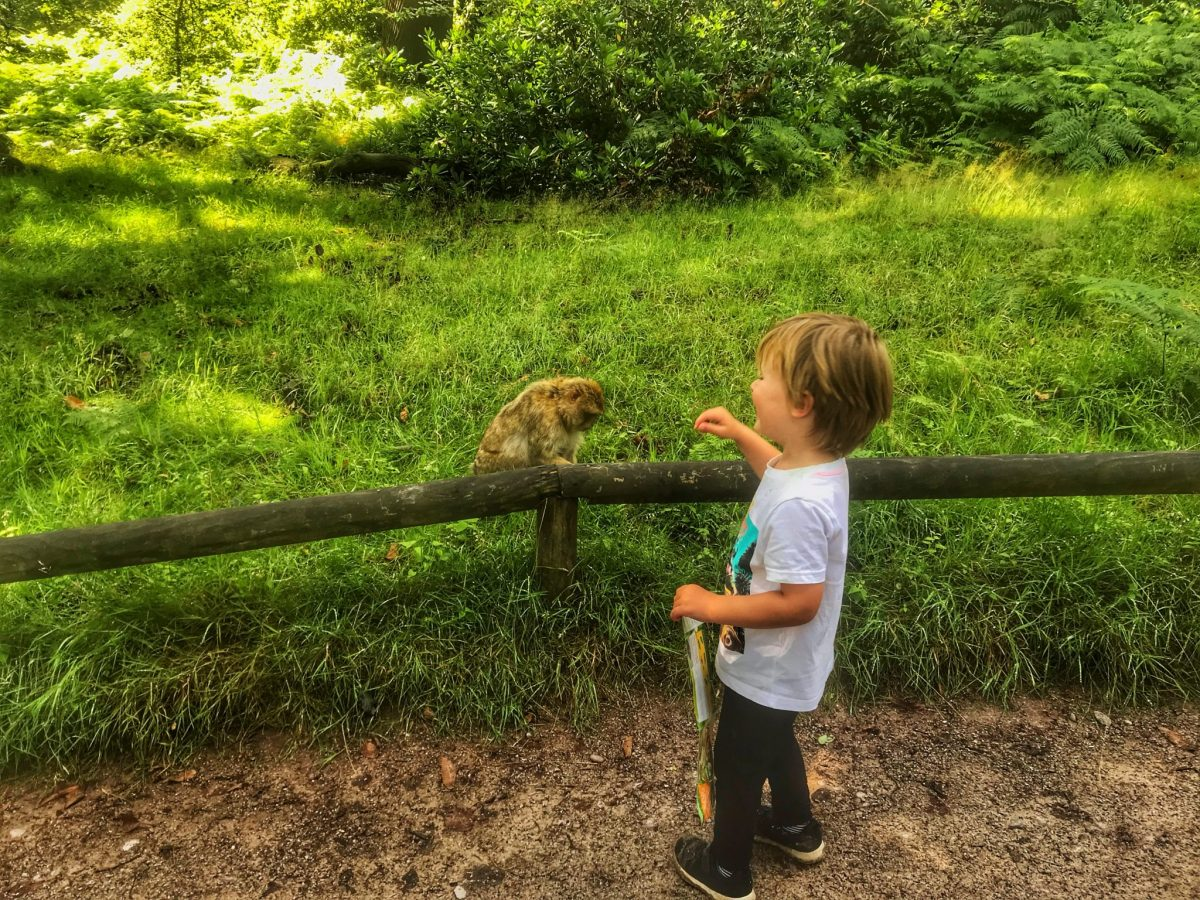 Dex smiling at a monkey behind a barrier at Trentham Monkey Forest