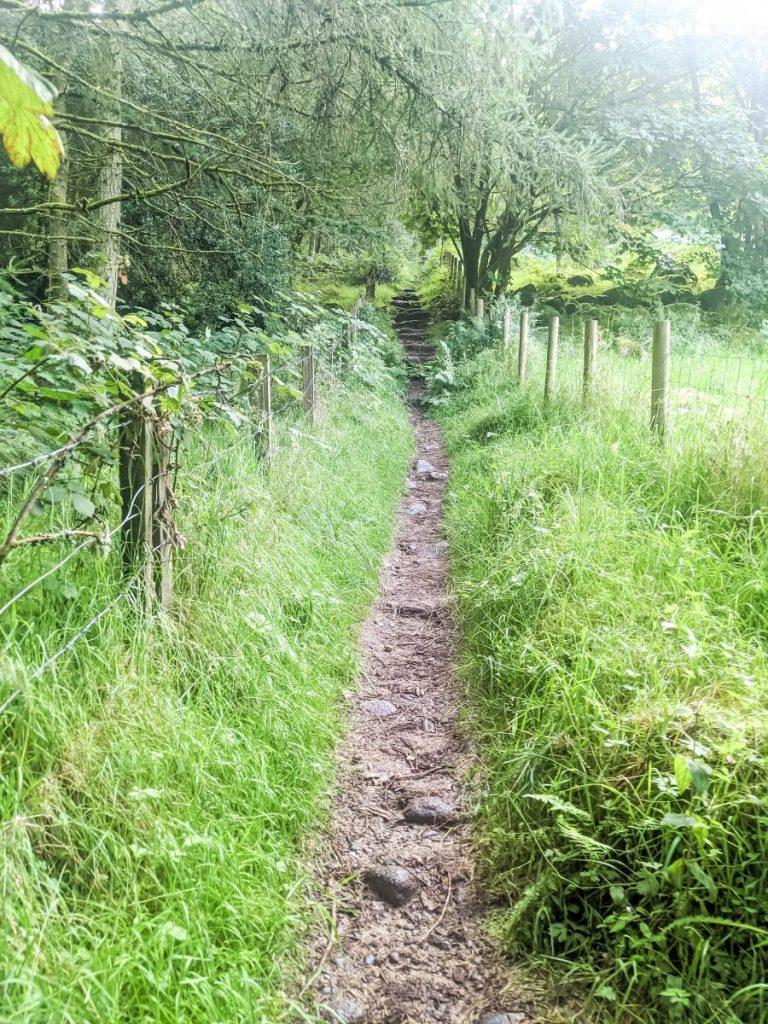 Path towards the summit of Waterloo hill